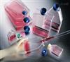抗CEA小鼠杂交瘤细胞特价;C2